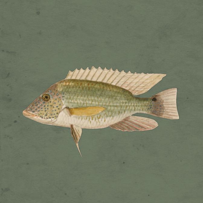 Peixes do Brasil